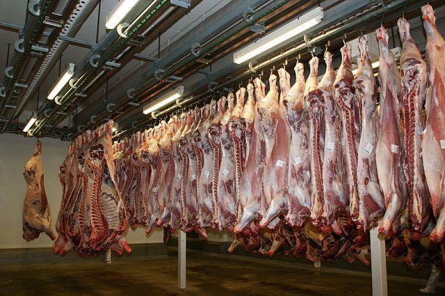 Schlachthöfe werden weniger und größer, Tiertransporte werden dementsprechend länger.