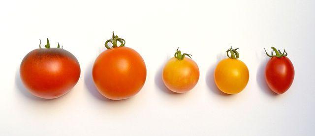 Alte Tomatensorten sind optisch und geschmacklich sehr vielfältig.