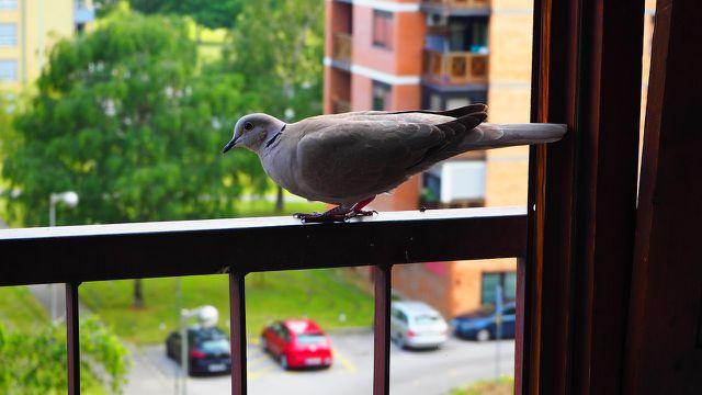 Taubenkot auf dem Balkon kannst du mit heißem Wasser entfernen.