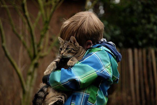 Katzen zeigen meist klar, wenn sie nicht mehr kuscheln wollen