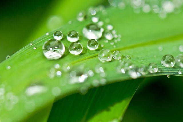 Regenwasser ist frisch destilliert und leicht sauer.