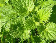 Homemade weed killer organic methods how to kill weeds naturally vinegar