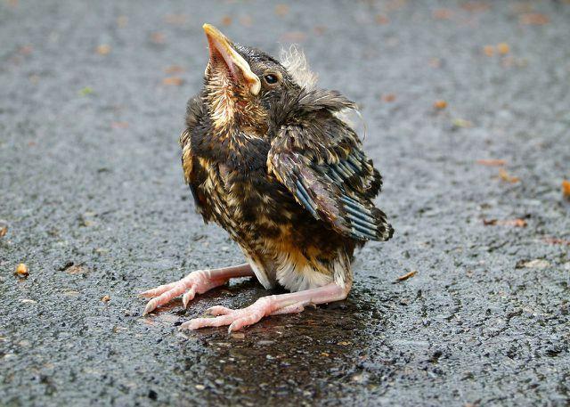 Verletzte Tiere sind bei einem Tierarzt oder einer Tierärztin gut aufgehoben.