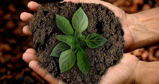 Du wünschst dir nachhaltige Veränderungen? Dann wähle sie.