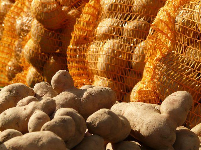 Kartoffeln sollten in kühlen, dunklen Räumen gelagert werden
