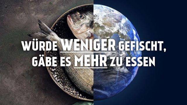 MSC Überfischung nachhaltiger Fischfang