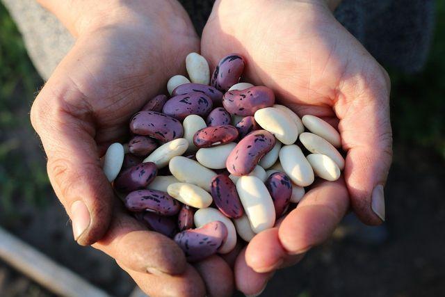 Achte darauf, dass die Bohnen für die Refried Beans möglichst aus Bioanbau stammen.