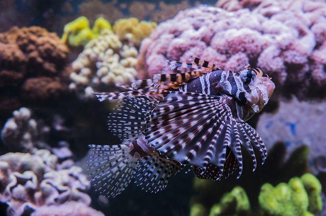 Korallenriffe sind durch die Klimaerwärmung stark bedroht und brauchen Artenschutz.