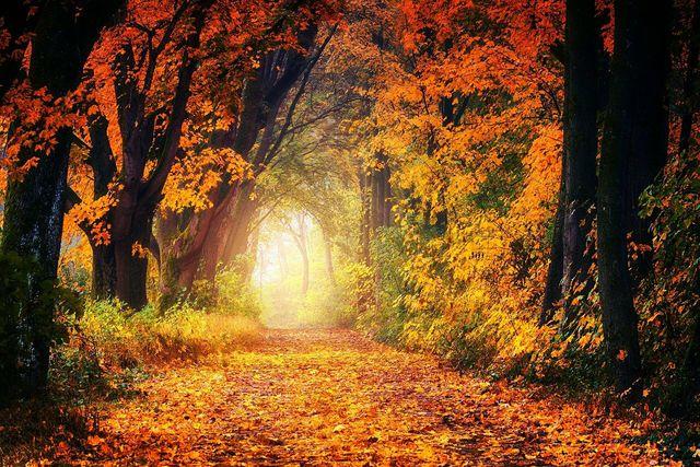 Der Herbst läutet die Vegetationsruhe des Winters ein.