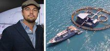 Leonardo DiCaprio, Sea of Shadows
