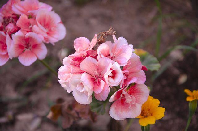 Im Frühjahr kannst du deine Begonie wieder auspflanzen