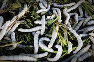 Maden in der Biotonne können sehr eklig sein, ein Befall lässt sich aber mit einfachen Mitteln vermeiden.