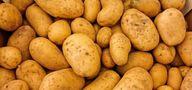 Wintergemüse Kartoffeln