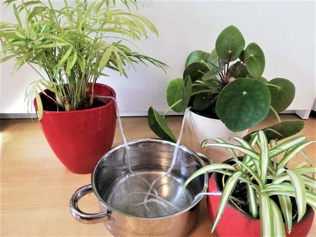 Mit der Gießschnur kannst du deine Pflanzen auch mehrere Tage bewässern.