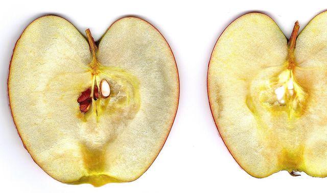 Apfelbaum aus einem Apfelkern ziehen.
