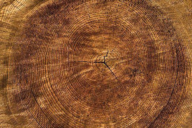 Zirbenholz hat eine auffällige Maserung