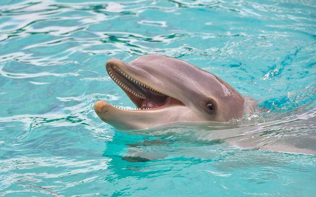 Der Chronotyp Delfin wach in der Nacht oft auf.