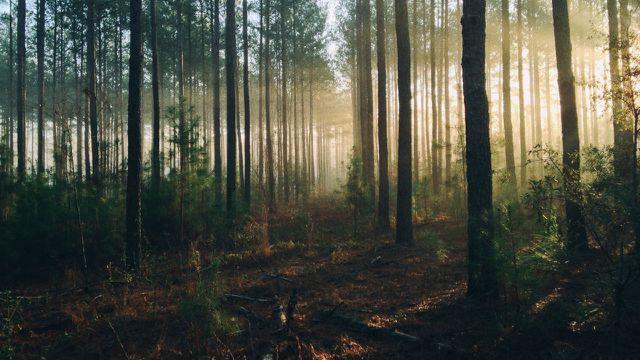 Aufforstungsprojekte helfen dem Wald nur dann, wenn dabei die individuellen Bedürfnisse von Boden, Klima und Baumarten beachtet werden.