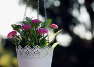 Zusätzlichen Platz für Pflanzen schaffen Hängeampeln.