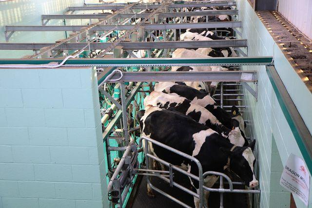 Industrielle Milchwirtschaft