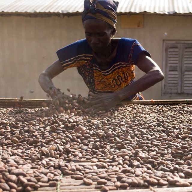 Kakaoherstellung ist Handarbeit - wichtig ist, dass sie unter fairen Bedingungen passiert