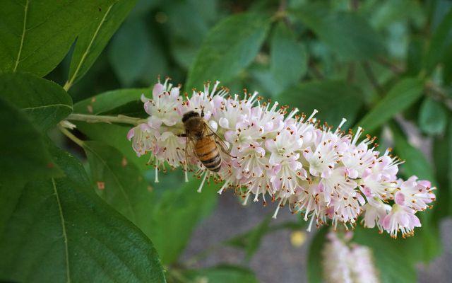 flowering shrub shade