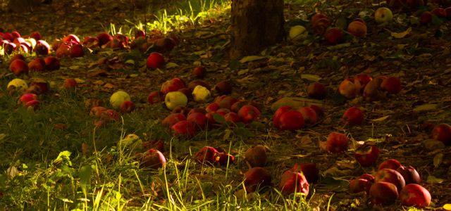 Es gibt viele Ernährungsformen: Frutarier essen, was vom Baum fällt