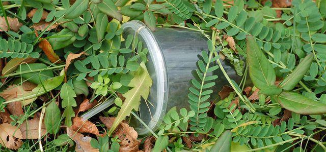 Bioplastik & Biokunsststoff: biologisch abbaubar oder nicht?