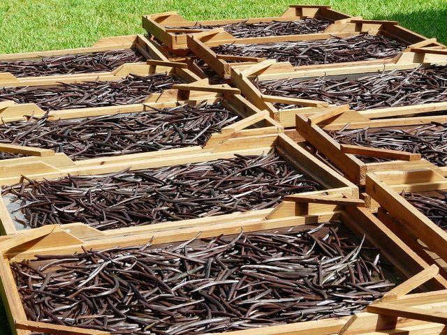 Der Anbau echter Vanille ist teuer und gefährlich.