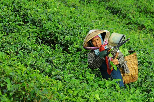 Mit Tee aus fairem Handel unterstützt du die Arbeiter*innen auf den Teeplantagen.
