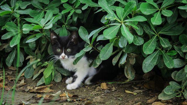 Die Verpiss-dich-Pflanze soll Tiere vertreiben.
