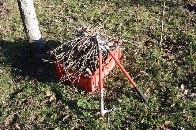 Apfelbaum schneiden: Ausgedünnte Zweige nach Herbstschnitt
