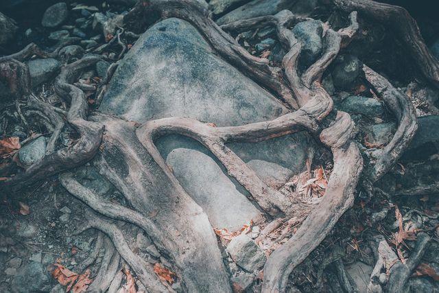 Aus spritueller Sicht spielen besonders die Wurzeln des Baumes eine wichtige Rolle.