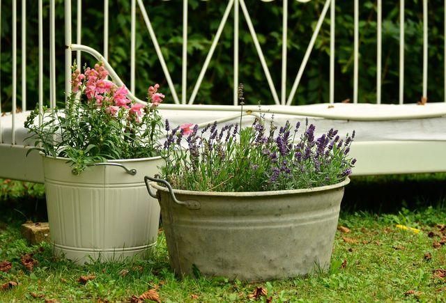 Lavendel eignet sich gut als Kübelpflanze.
