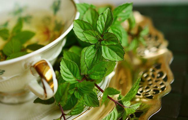 Pfefferminze schmeckt nicht nur im Tee, sondern auch in selbstgemachten Bonbons.