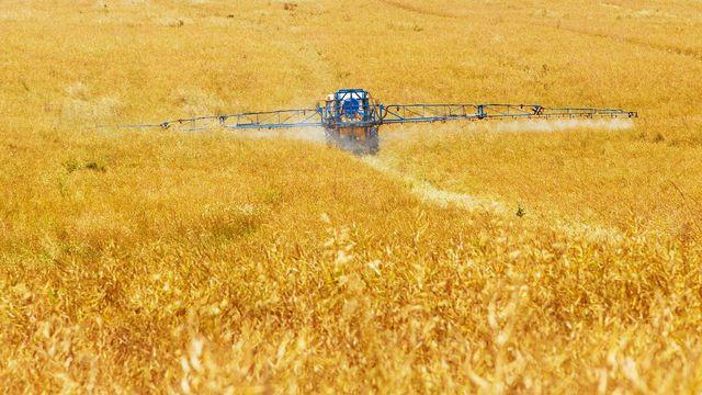 Gentechnik-Felder werden manchmal mehr gespritzt als konventionelle Felder