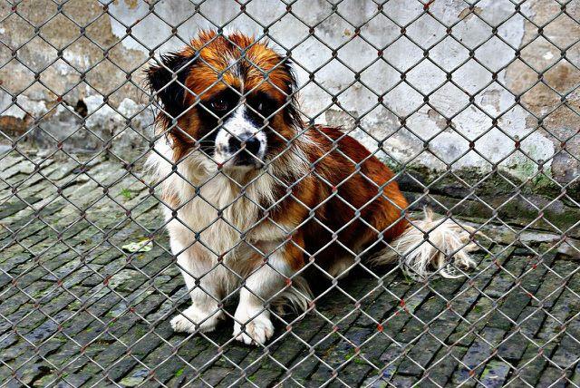 In Tierheimen warten die unterschiedlichsten Tiere auf ein Zuhause.