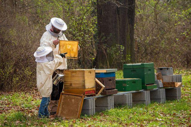 Es gibt zwei Möglichkeiten, Bienen zu füttern: Mit Sirup oder Zuckerteig.