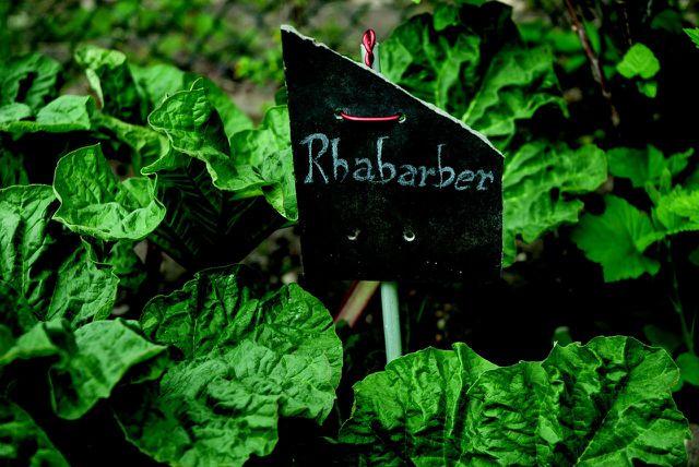 Rhabarber hat in Deutschland nur drei Monate Saison, nämlich von April bis Juni.
