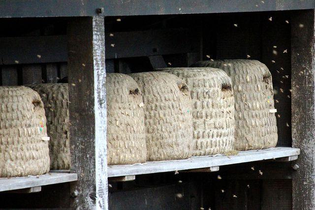 Heidehonig wird oft noch traditionell hergestellt. Bienenvölker leben zum Beispiel in traditionellen Bienenkörben.