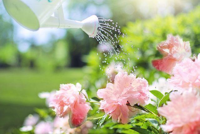 Gieße deinen Rhododendron nur mit kalkarmem Wasser