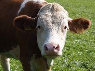 Mit Bio-Milch einen Beitrag gegen die Massentierhaltung leisten.