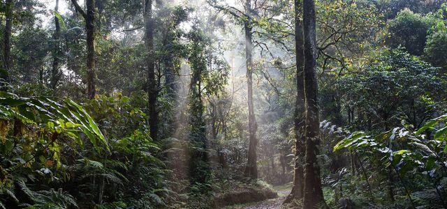 regenwald abholzung
