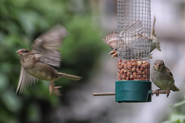 Vogelfutter Selbst Machen Mischung Mit Heimischen Zutaten Utopia De