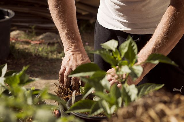 Deinen Garten kannst du mit allen Sinnen erleben.