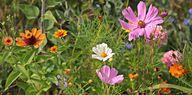 Für einen insektenfreundlichen Garten kannst du entweder ein ganzes Beet für Wildblumen anlegen oder sie einfach in einer kleinen Wiesenecke pflanzen.