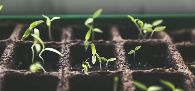 Stecklinge Ziehen 5 Pflanzen Die Du Einfach Zuchten Und Vermehren
