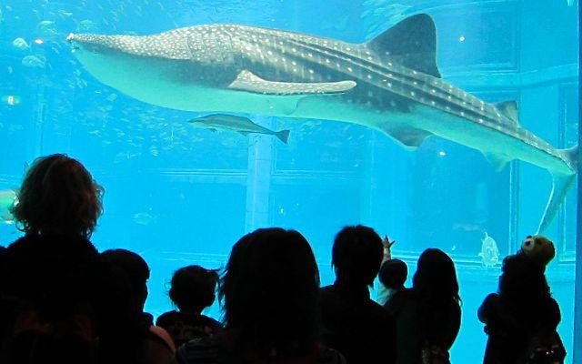 Aquarien, Zoos, Delfinarien: Touristenattraktion Tiere leiden