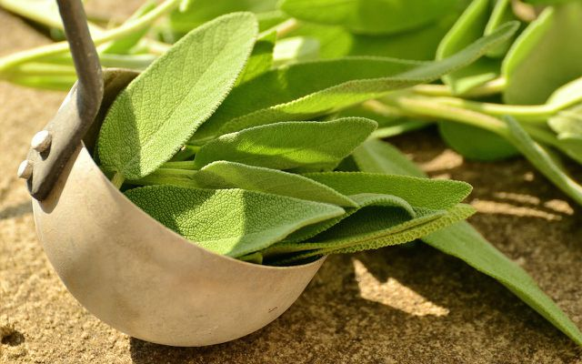 Home remedies for dry cough sage