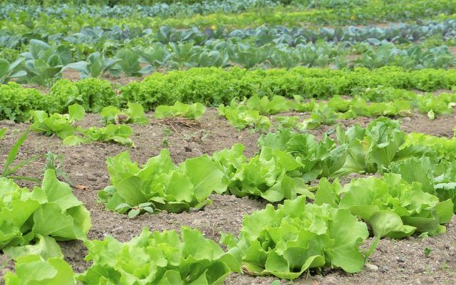 Phosphate vermeiden mit biologischer Landwirtschaft.